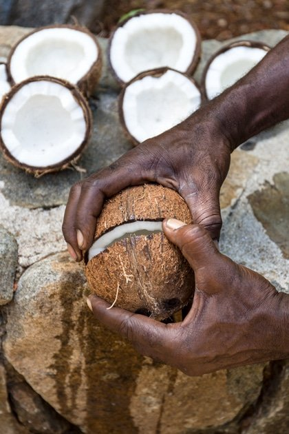 A man is breaking coconut using the edge of a stone shelf