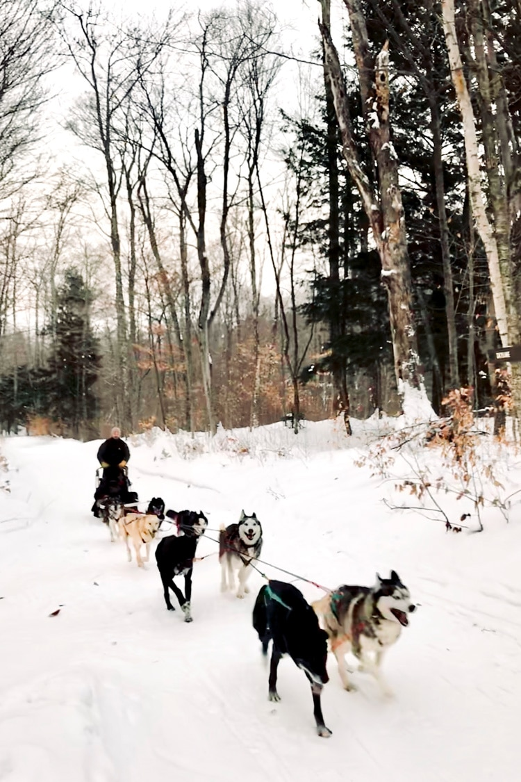 Sledding dogs in Stratton Mountain in Vermont - Photo of dogs running in snow