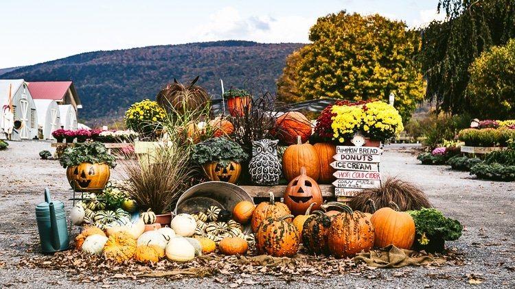 Vermont Fall Vacation - Visit to our local Pumpkin patch