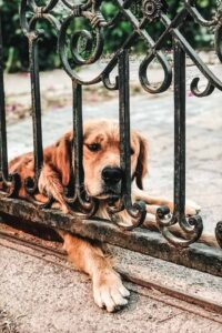 A dog sitting in front of a gate. Foolproof Life Lately July 2020