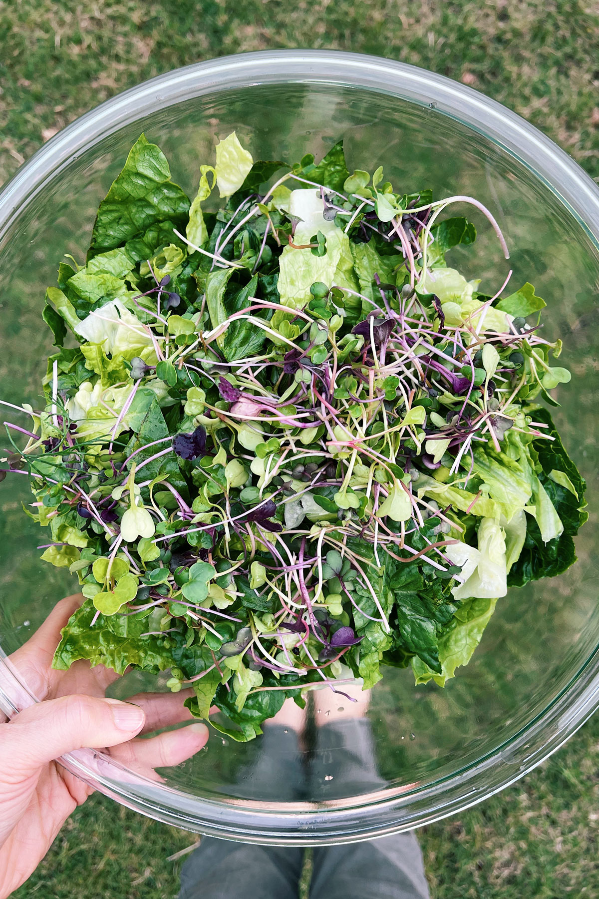 Person holding a bowl of microgreens and leafy salad greens