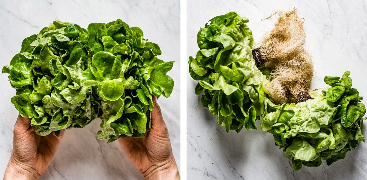 Photos showing what butter lettuce looks like