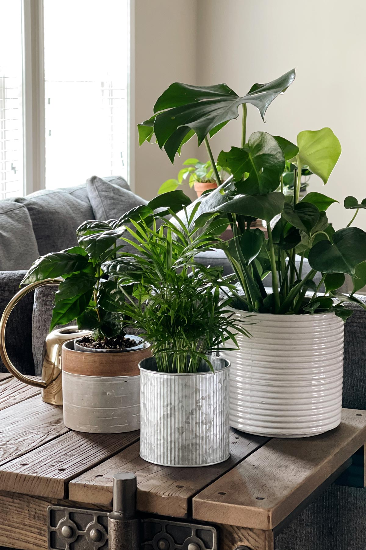 Houseplants from the front view in a living room setting