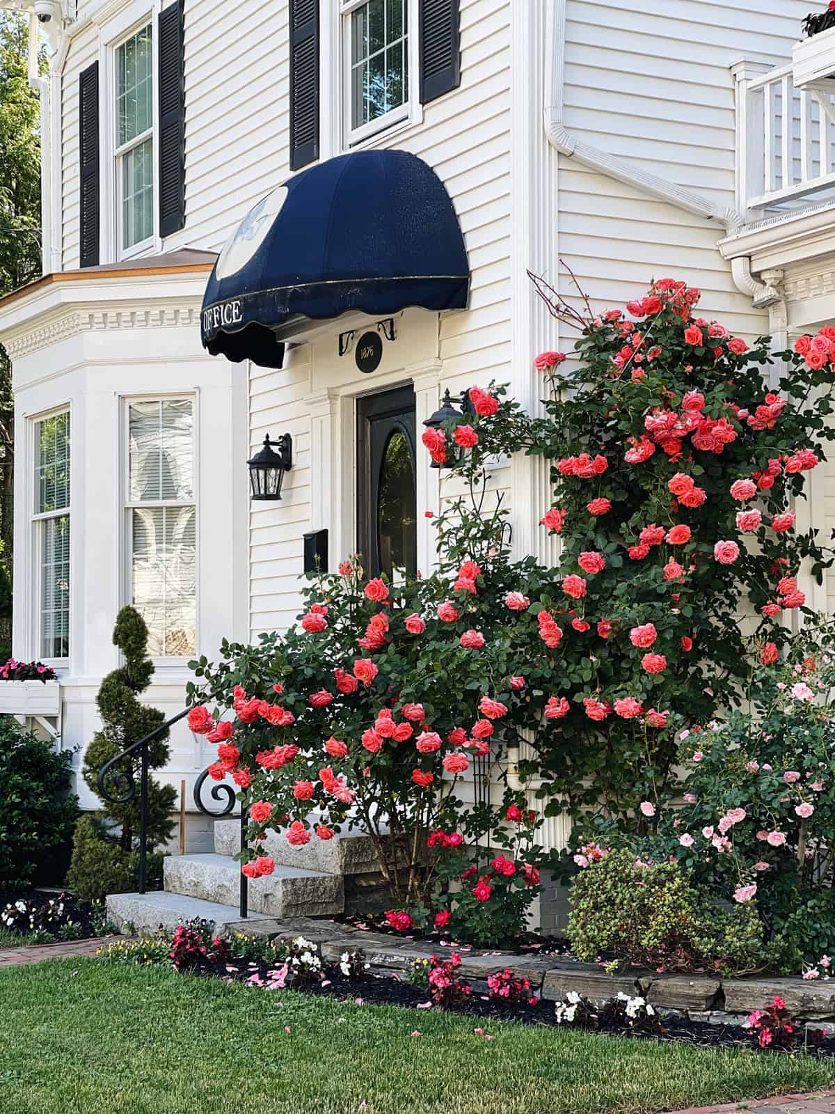 A small bed and breakfast with roses spot in Boothbay Harbor, in Maine.