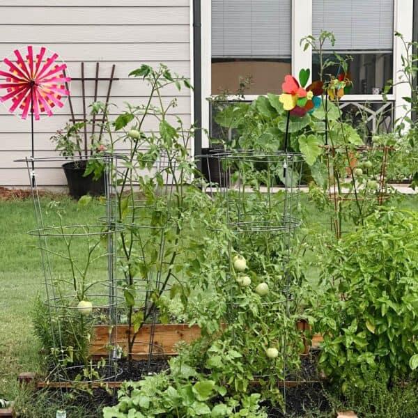 A photo of my backyard
